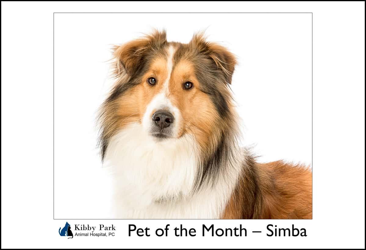Pet Of The Month Kibby Park Animal Hospital