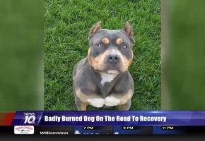 Lisa Jackson S Dog Training Service