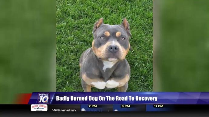 Badly Burned Dog on the Road to Recovery | Posted by WILX News 10